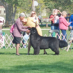 breed show at the National Specialty